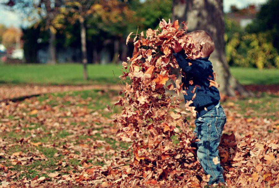 5 Fun Things to do on Fall Break